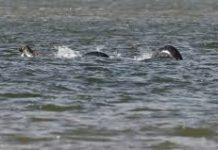 Loch Ness Eel