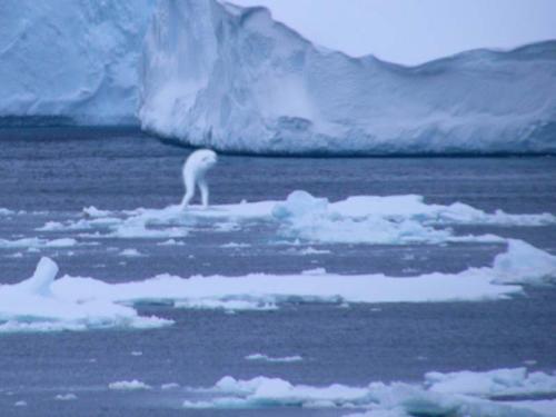 Ningin Ice