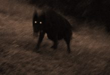 Phantom Dogs