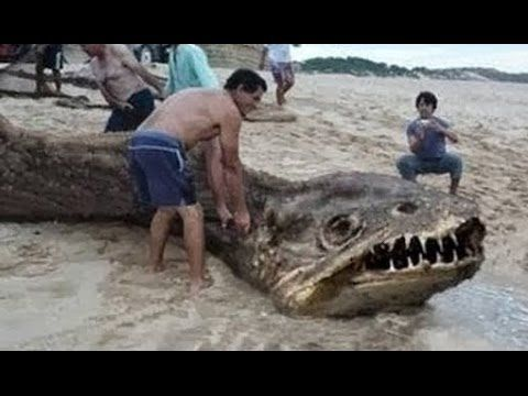 Sea Serpent Head
