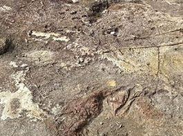 Yawie Footprint